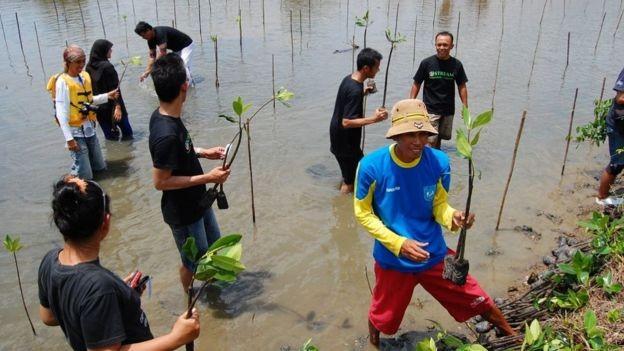 Plantar e restaurar florestas de mangue fornece proteção natural valiosa para costas vulneráveis (Foto: JELAJAH PANGANDARAN, via BBC News Brasil)