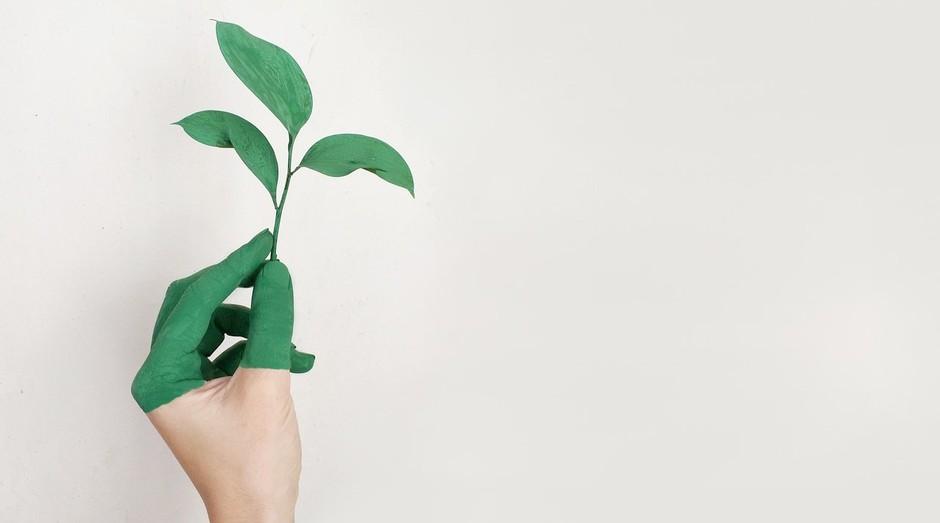 Sustentabilidade; meio ambiente (Foto: Pexels)