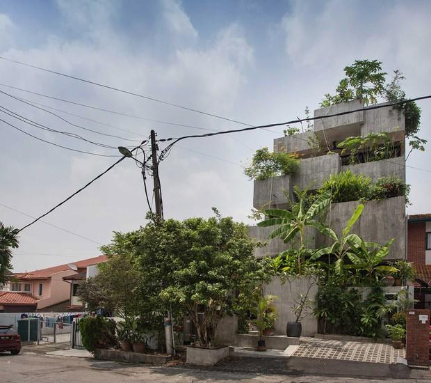 Casa de três andares oferece espaço para plantação de mais de 40 espécies