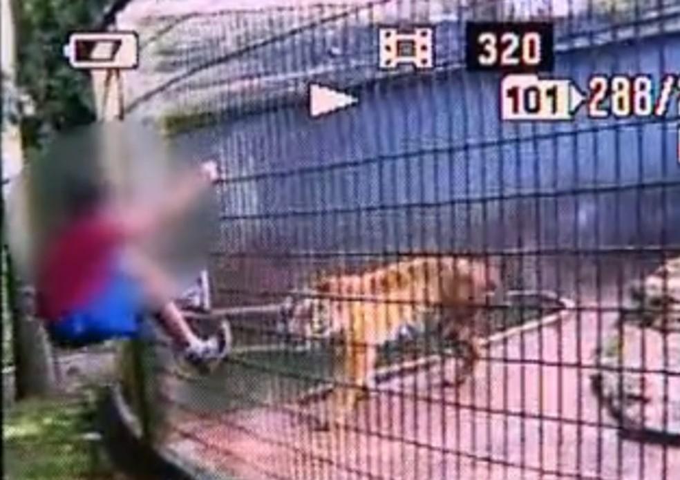 Menino teve o braço dilacerado por tigre em zoológico de Cascavel — Foto: Reprodução / RPC TV