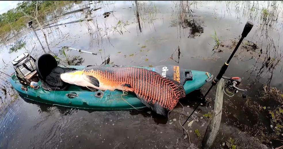 Fábio Baca registrou momento em que pescou pirarucu com cerca de 2 metros em Rondônia — Foto: Reprodução/Redes Sociais
