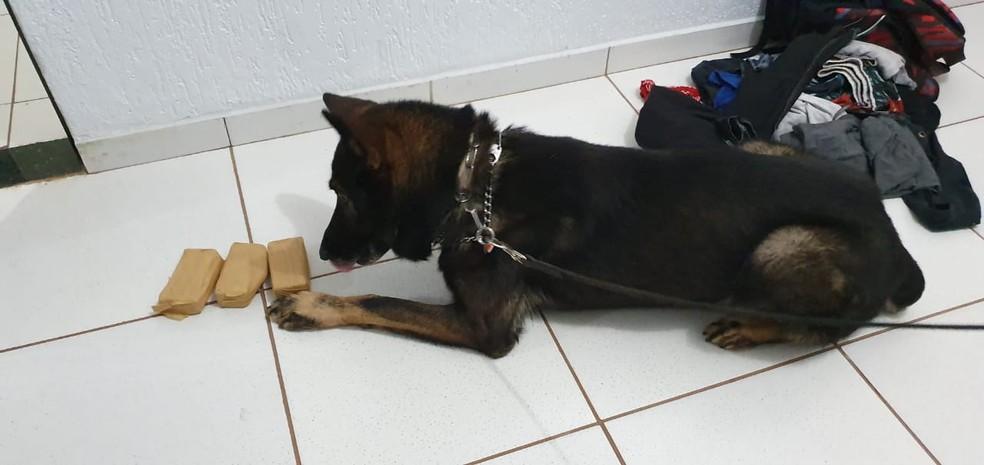 Droga foi encontrada com a ajuda de um cão farejador  — Foto: Divulgação/PF