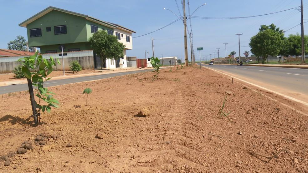 Projeto de arborização planta mais de 500 mudas em avenida recém-asfaltada de Ariquemes, RO — Foto: Rede Amazônica/Reprodução