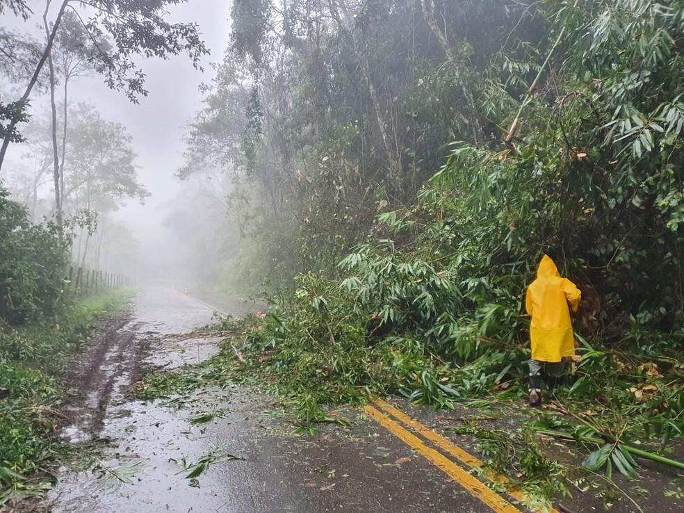 Queda de árvore interdita trecho da RJ-182, em Santa Maria Madalena, no RJ — Foto: Defesa Civil