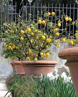 árvore-frutífera-maracujá (Foto: Divulgação)