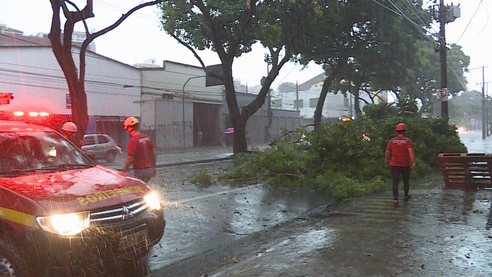 Árvore cai na Avenida Carlos Luz, no bairro Caiçara, em Belo Horizonte (Foto: Reprodução/TV Globo)