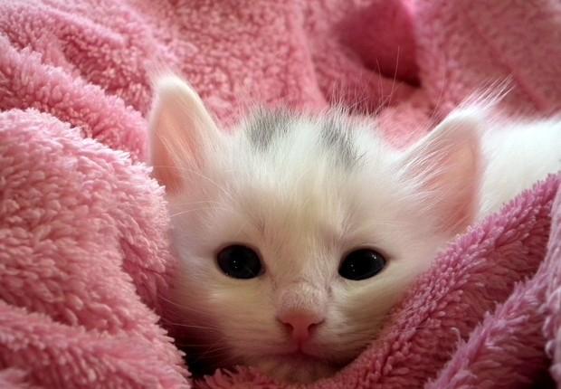gato, filhote, animal (Foto: Pexels)