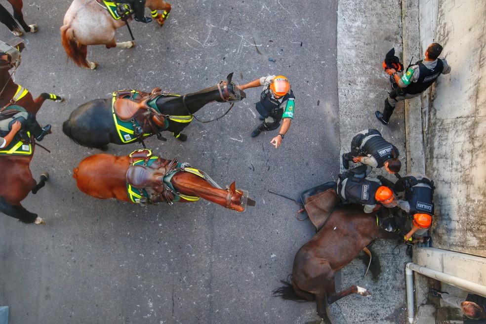 Veterinário da corporação avaliará animal para atestar a causa da morte — Foto: Lauro Alves/Agência RBS
