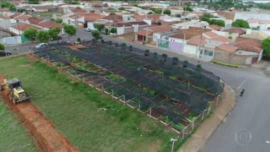 Hortas comunitárias se espalham pelo Brasil
