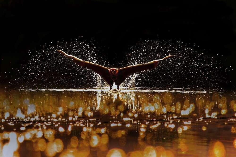 Splash, por Sujon Adhikary (Foto:  @sujonadhikary )