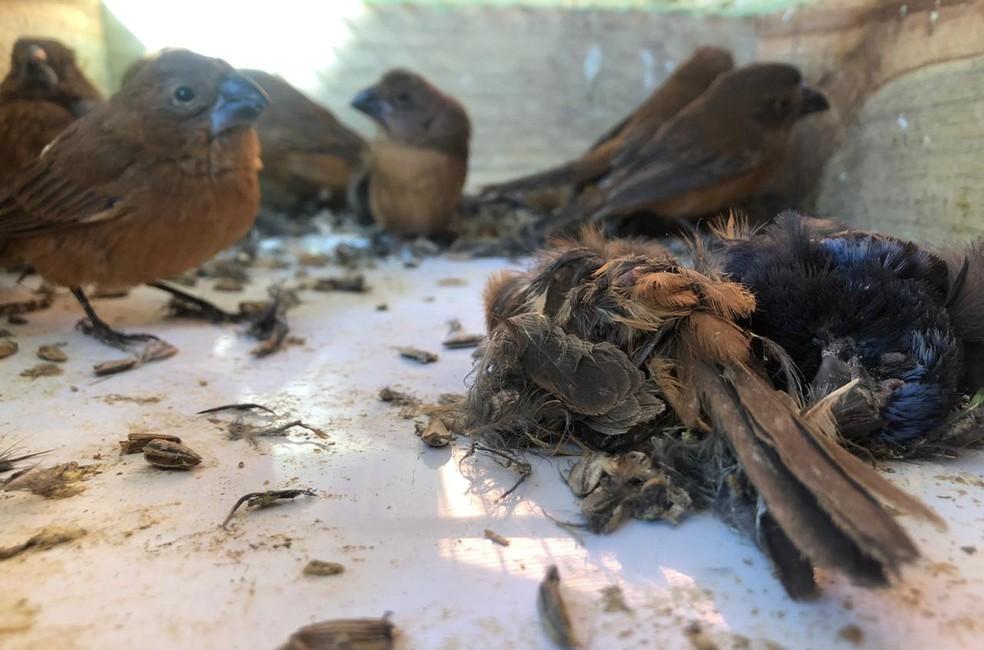 Animais vítimas do tráfico estavam em situação de maus tratos quando foram encontradas em Vargem (SP) — Foto: Associação Mata Ciliar/Divulgação