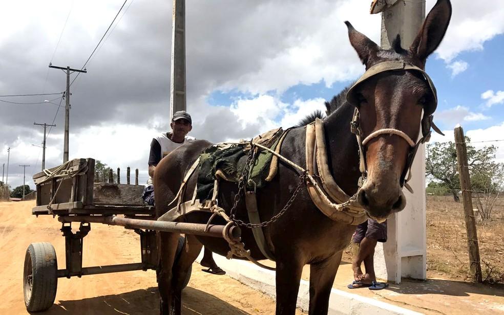 Carroça de tração animal  (Foto: Alan Tiago Alves/G1)