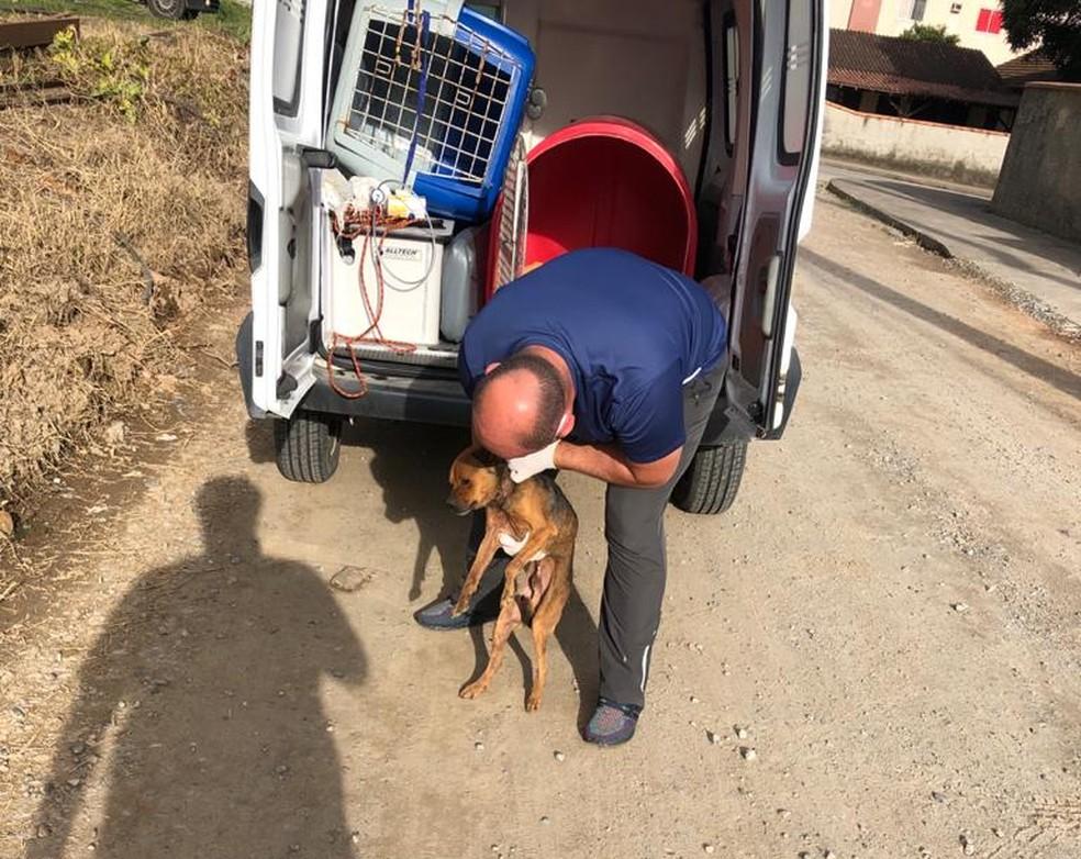 Centro de Bem-Estar Animal de Joinville fez o resgate do animal e o encaminhou até uma clínica — Foto: Frada/Reprodução