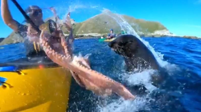 """Momento em que homem é """"atacado"""" pela foca (Foto: Reprodução)"""