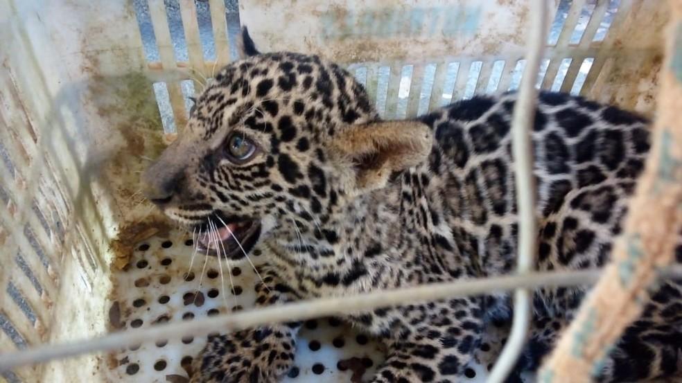 Filhote foi deixado em pet shop de Sorriso, a 420 km de Cuiabá (Foto: Corpo de Bombeiros/Divulgação)