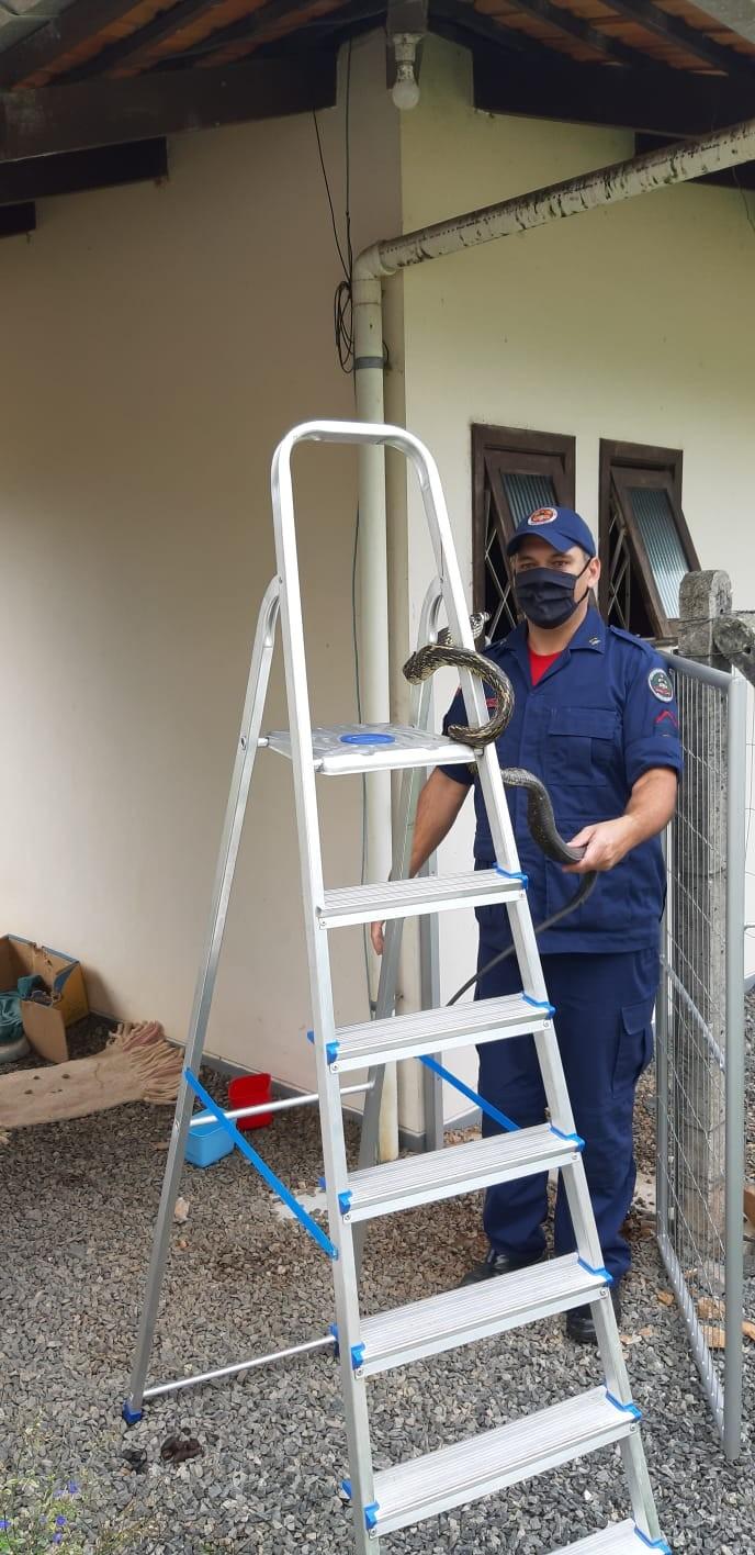 Bombeiros capturam cobra no telhado de casa em Timbó