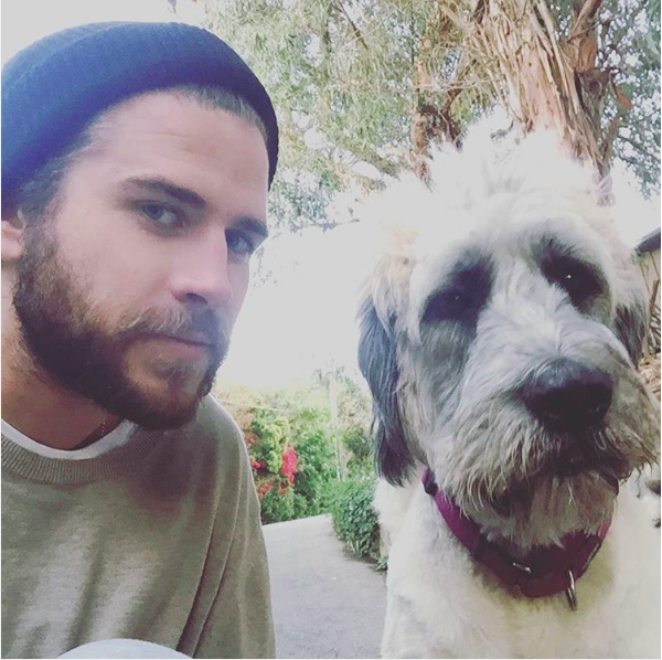 A cachorrinha Dora do ator Liam Hemsworth (Foto: Instagram)
