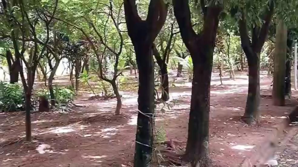 Moradora de Fernadópolis transformou um terreno em uma área verde  (Foto: Reprodução/TV TEM)