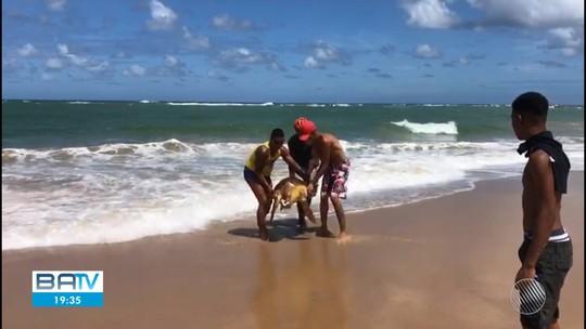 Tartaruga é achada morta em praia do sul da Bahia; ONG registra 92 mortes na região
