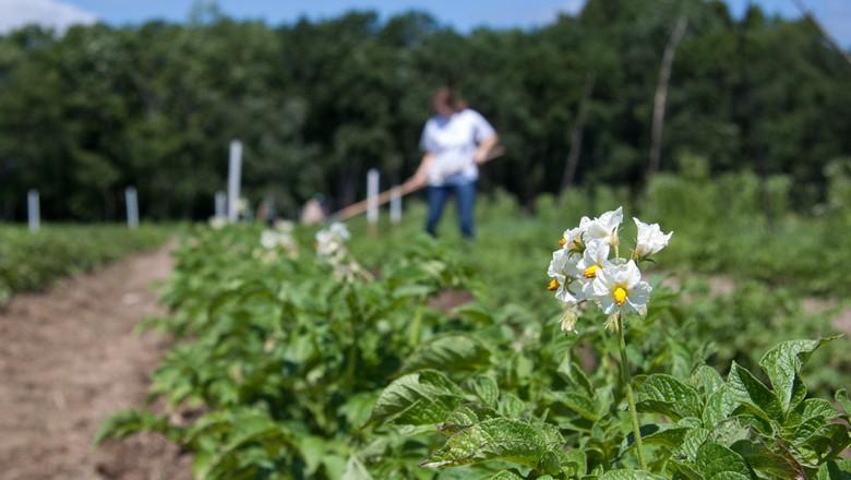 raiz-lavoura-fazenda-plantacao-plantação-agricultura (Foto: Flickr/Tim Sackton/Creative Commons)