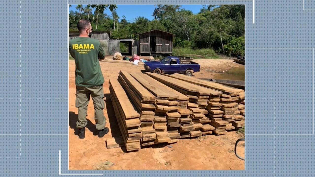 Operação Verde Brasil prendeu 4 pessoas e autuou 17 por crimes ambientais