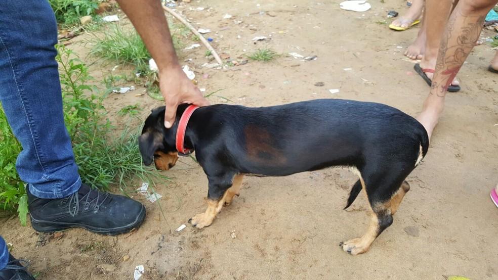 Cachorro estava marcado com sigla de uma facção criminosa (Foto: Divulgação/Polícia Civil do Acre)