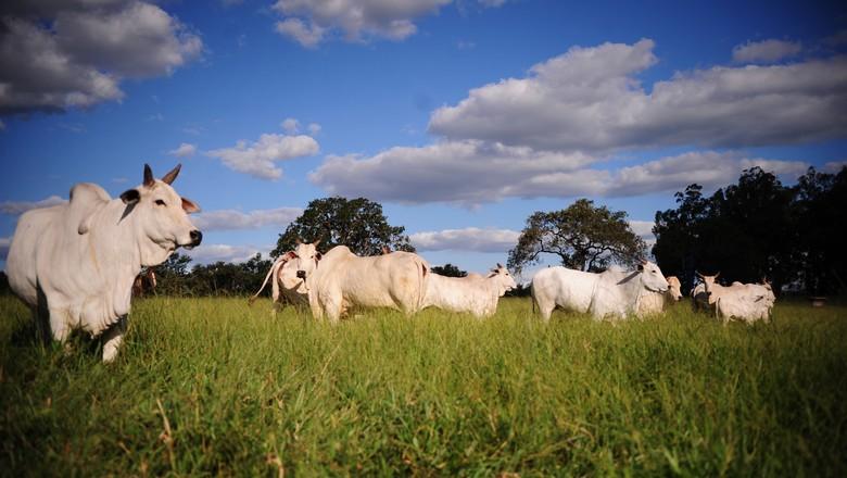 gado-boi-pecuária-bovino-pecuaria (Foto: Ernesto de Souza/ Ed. Globo)