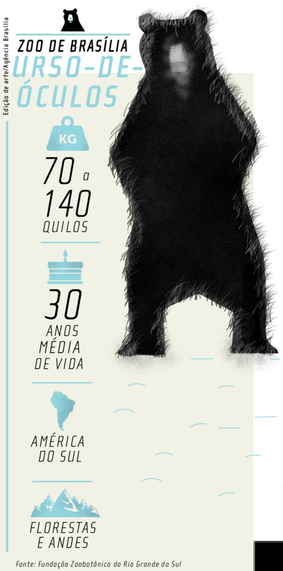Ameaçado de extinção, o urso-de-óculos pode ser encontrada nos Andes. Ele vive, em média, 30 anos e pesa de 70 a 140 quilos (Foto: Edição de Arte/Agência Brasília)