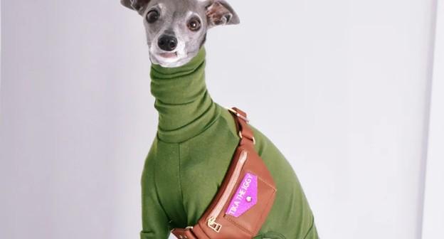 Conheça o cachorro que viralizou na internet e se transformou em um negócio de sucesso
