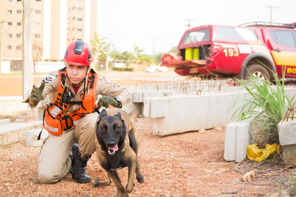 Cães vão ajudar no trabalho dos Bombeiros — Foto: Luiz Henrique Machado/Corpo de Bombeiros