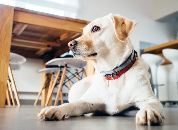 cãozinho-comom-limpar-a-casa-com-pets (Foto: Divulgação)