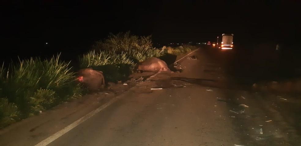 Segundo a PRF, animais haviam fugido de fazenda localizada nas proximidades da rodovia. — Foto: Divulgação/PRF-MA