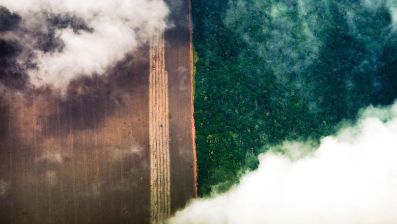 Amazônia - Foto aérea da floresta (Foto: Marcelo Camargo/Agência Brasil)