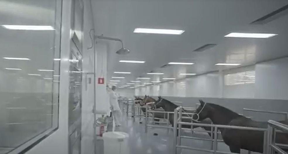Soro anti-Covid está em desenvolvimento pelo Instituto Butantan, em Sâo Paulo — Foto: Instituto Butantan/Divulgação