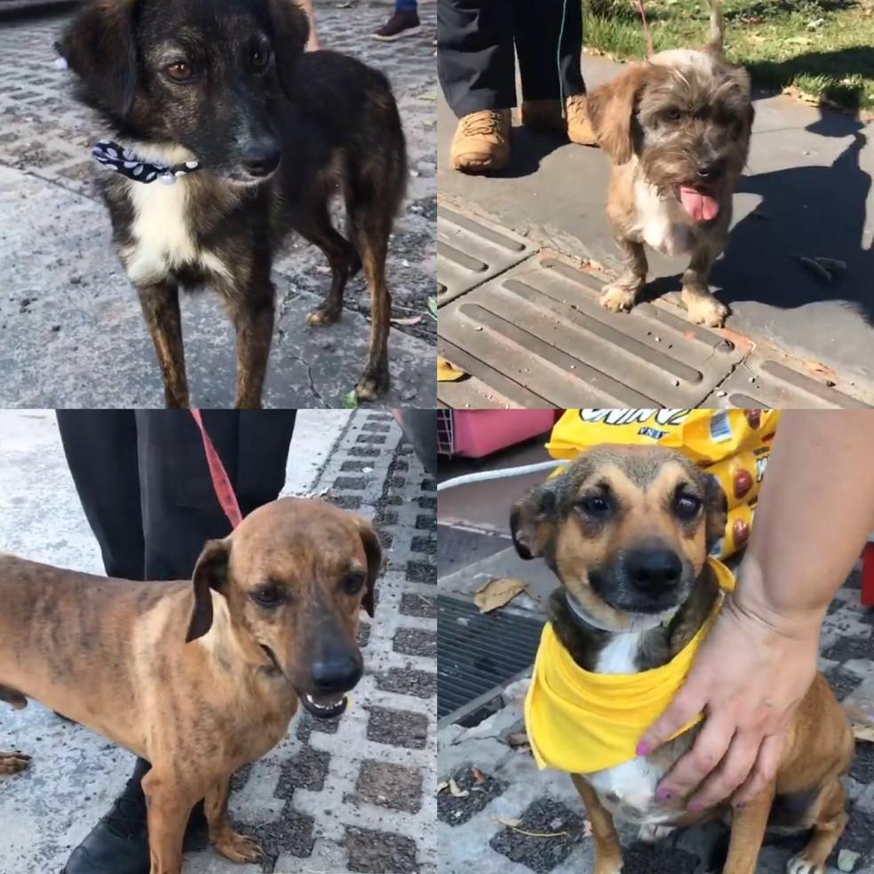 Decat promove feira de adoção de cães em parceria com ong em Campo Grande — Foto: Redes sociais/Reprodução