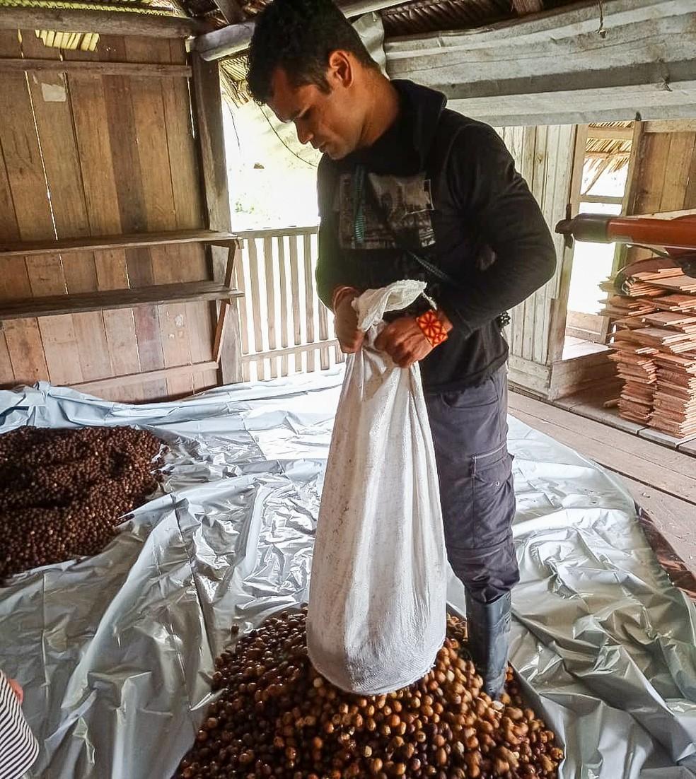 Próxima fase do projeto é coletar sementes para comercialização — Foto: Arquivo/Associação Apiwtxa