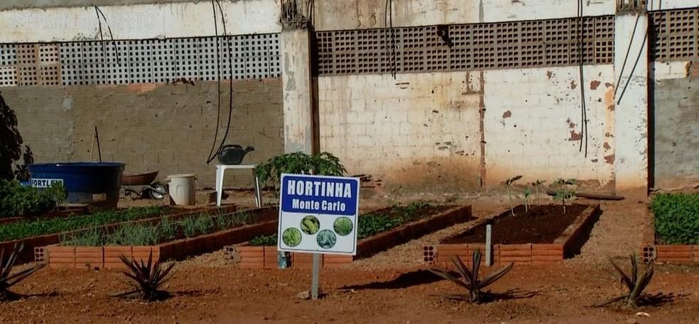 Horta comunitária também ajuda a evitar aglomerações e prevenir a Covid-19 — Foto: Reprodução/TV Anhanguera