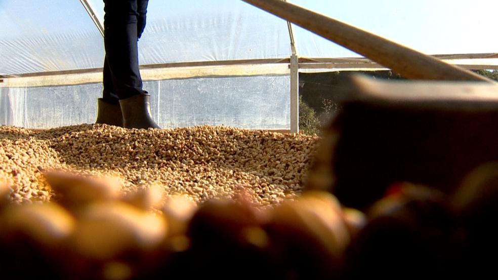 Café de qualidade é produzido em Itarana, no Espírito Santo (Foto: Vinícius Gonçalves/ TV Gazeta)