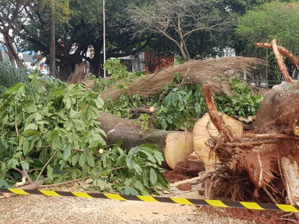 Árvores foram cortadas na raiz por equipes da prefeitura de Bauru  — Foto: Arquivo pessoal