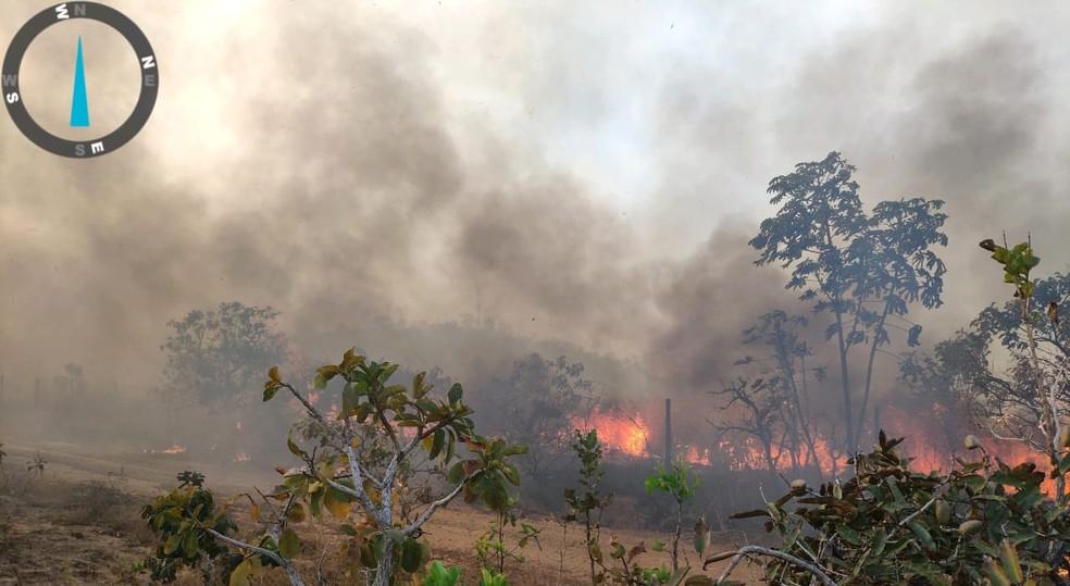 Queimada atingiu região de cerrado em MT — Foto: Corpo de Bombeiros
