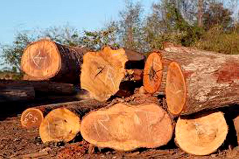 Toras de madeira foram apreendidas por fiscais do Ibama no local (Foto: Ascom/MP)