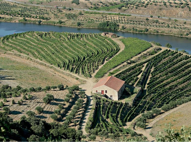 Vista da Quinta do Vale Meão, situada em Vila Nova de Foz Côa (Foto:  )