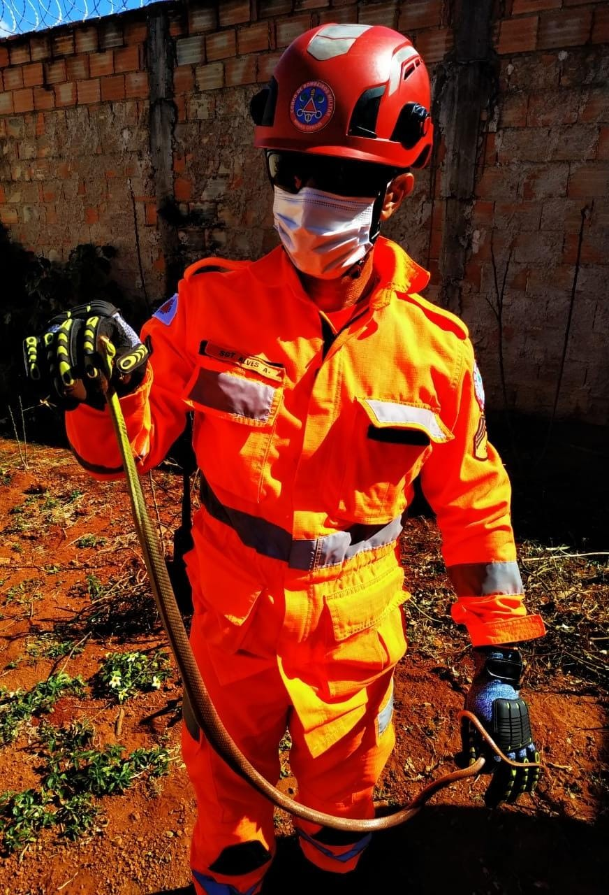 Bombeiros capturam cobra-cipó em quintal de casa em Uberaba