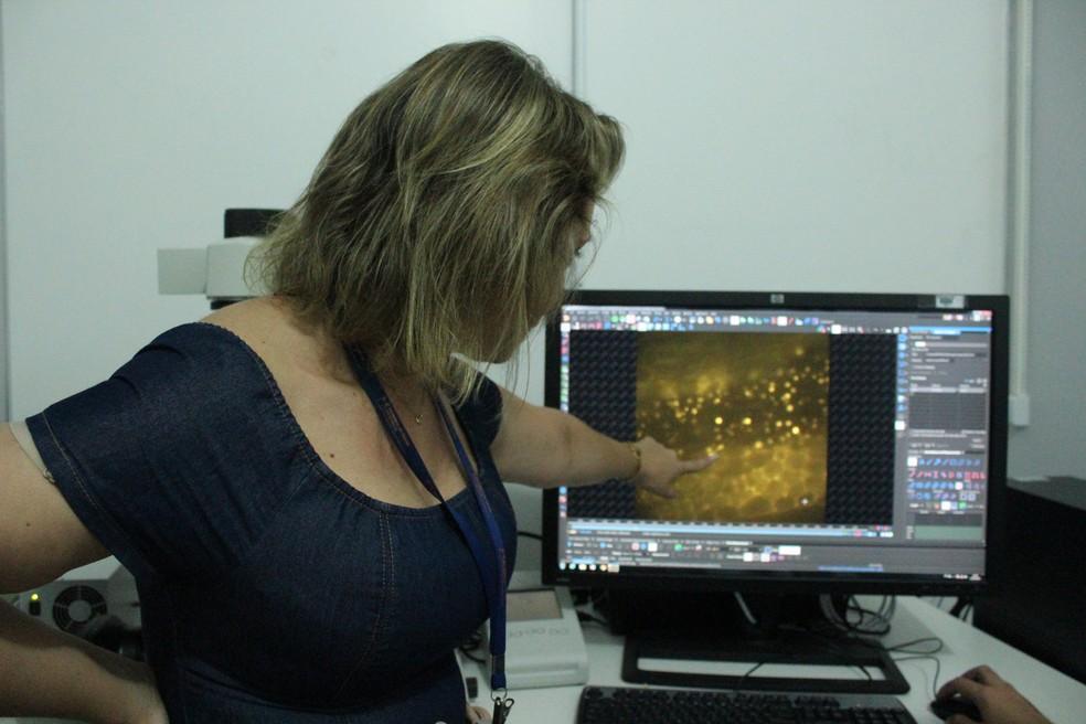 Pesquisadora Juliana Zuliani, da Fiocruz, mostra imagem capturada pelo novo sistema.  — Foto: Pedro Bentes/G1