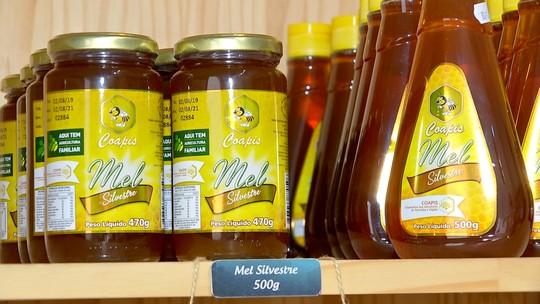 Preço do mel no atacado desagrada apicultores