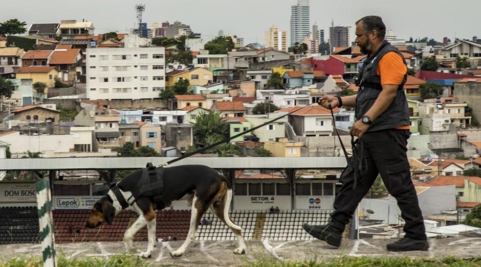 Busca Pet (Foto: Divulgação)