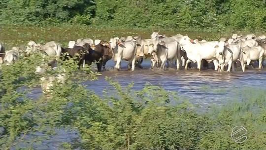 Cheia do rio Miranda muda rotina de pantaneiros em MS
