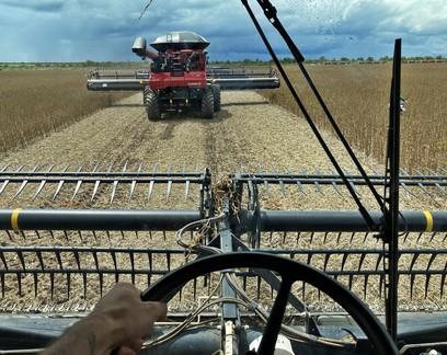 dirigindo máquina agrícola