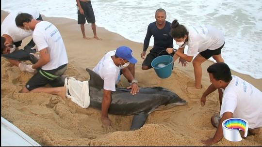 Golfinho que encalhou em praia é devolvido ao mar após tratamento em Ubatuba
