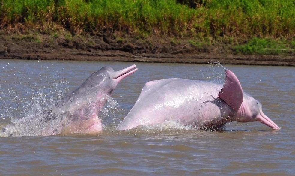 Biólogo colombiando tem se dedicado a proteger esses animais (Foto: BBC)